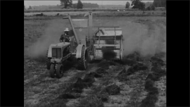 1930s: Field of mammoth English clover. Farmer drives tractor and combine harvester over field of cut mammoth English clover.