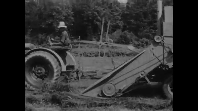 1930s: Farmer drives tractor and combine harvester over field of cut poor man's clover.