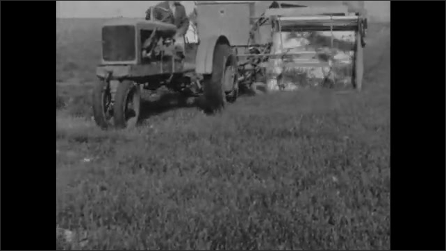 1930s: Farmer drives tractor and combine harvester over field of cut Korean Lespedeza grass.