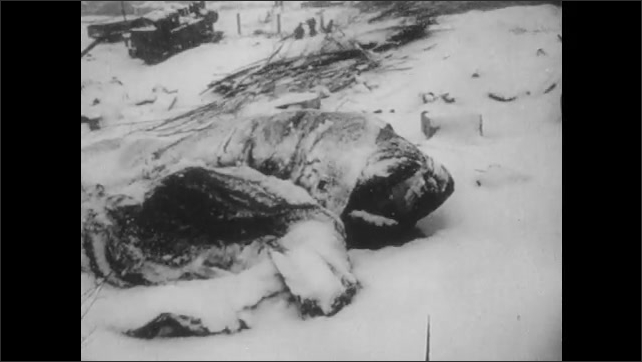 1950s: UNITED STATES: soldiers rest in blizzard. Soldiers shelter under covers. Soldier eats snow.