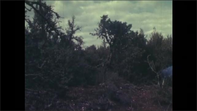 1970s: Men walk into bushes. Men walking through bushes, man points.