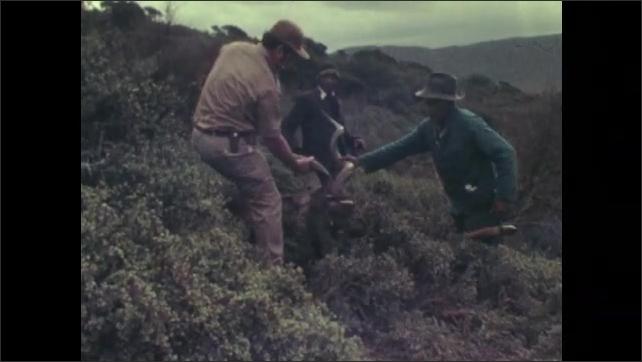 1970s: Men by dead antelope. Men moving carcass. Men lift up head of antelope.