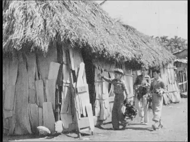 Cuba 1940s: Boys harvesting vegetables. Boys approach house. Boys give vegetables to woman.