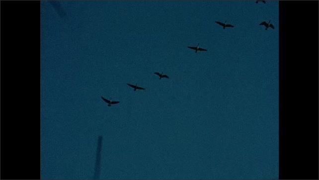 1930s: UNITED STATES: geese fly in formation in sky.
