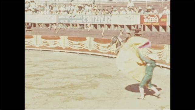 1940s: Toreador on horse dances around bull in ring for spectators.