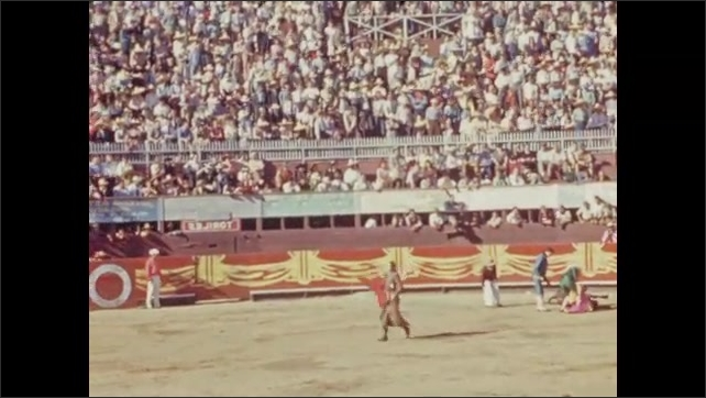 1940s: Men in ring taunt bull with capes. Crowd in stands at bullfighting arena.
