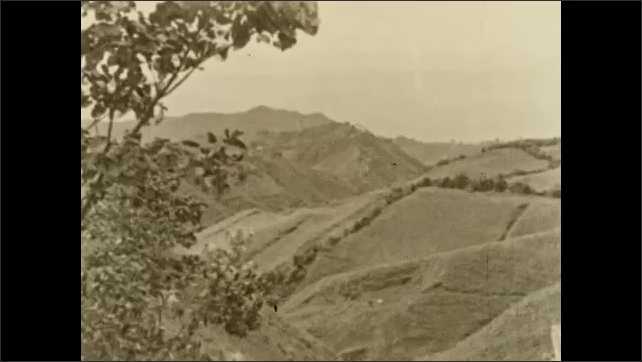 1930s: COLUMBIA: SOUTH AMERICA: tree blows in breeze. View across valley and hills