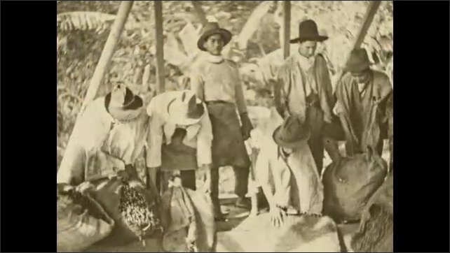 1930s: COLUMBIA: SOUTH AMERICA: beans arrive at pulper. Outer skin and pulp removed from coffee beans. Workers bring sacks of coffee beans to market. Men empty sacks.