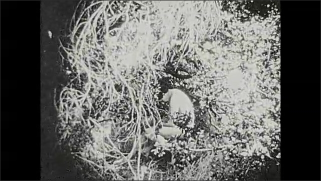 1920s: Snake slithers past tree trunk. Woman pulls tree branch towards herself. Man lies curled up on grass. Light shines on man and he looks up.