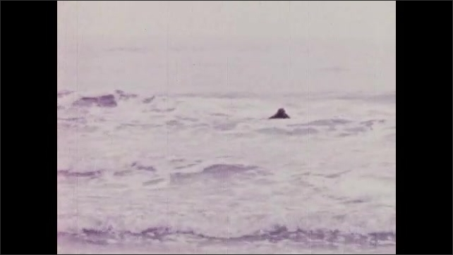 1950s: UNITED STATES: metal pipe on ground. Scuba diver in sea. Diver in waves by shore. Waves crash on beach