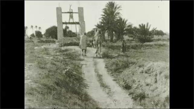 1950s: Man walks to well with camel.