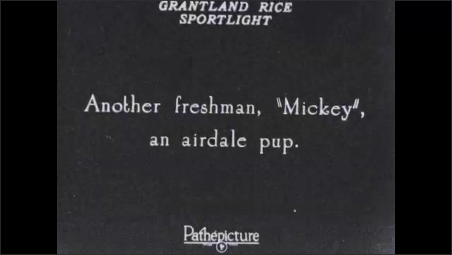 1930s: Trainer stands puppy up while boys with dogs watch. Man hands puppy to boy and retrieves new puppy, Text placard. Trainer stands puppy up while boys with dogs watch. Text placard.