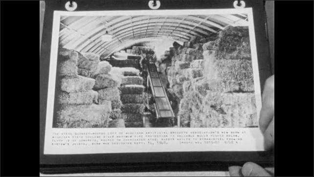 1960s: UNITED STATES: hand turns page in photo book. Hay stored in building. Cows inside building
