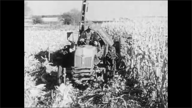 1960s: UNITED STATES: man stands by corn drying building. Man drives tractor in field. Man picks corn. Corn husks.