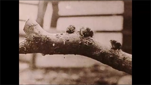 "1930s: Caption reads ""And Little Sister, because you have waited so long, here is an extra large wiggly worm for you.""  Mother bird feeds babies on branch."