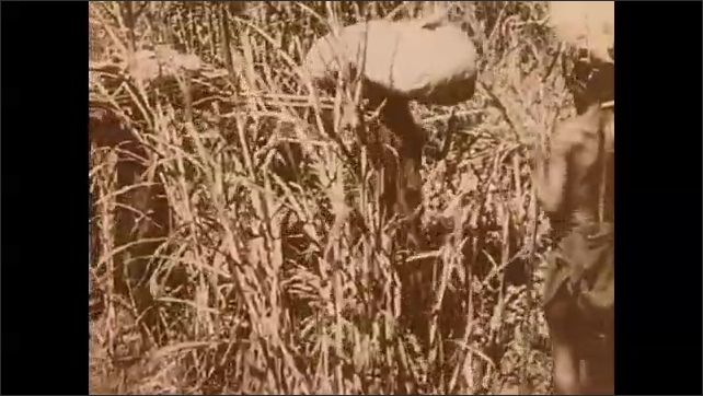 AFRICA 1930s: Long shot of group of baboons. Intertitle. People carry cargo across river. Men carrying cargo. Intertitle.