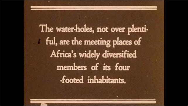 AFRICA 1930s: Man propping up dead gorilla. Intertitle. Animals gathered around water.