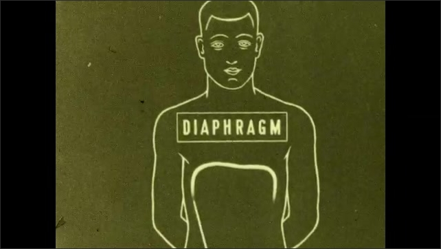 1930s: Men play football. Outline of man, text. Drawing of diaphragm and label. Drawing of ribs and label.
