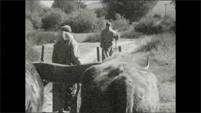 1930s: Men walk down road.  Cattle pull cart.