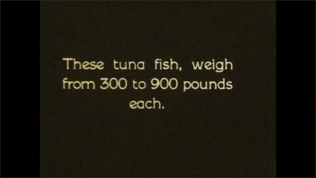 1930s: Fishermen hoist giant tuna out of water. Intertitle card. Pile of giant tuna lay in boat.