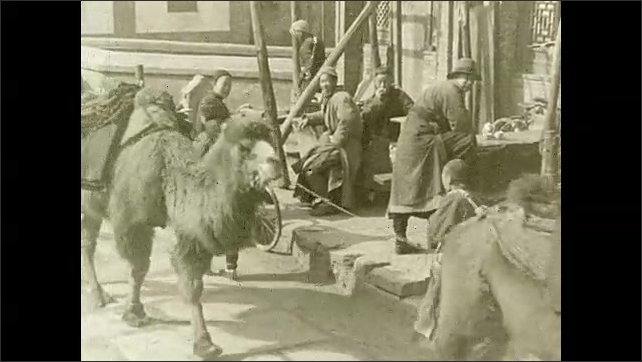 1930s: Baby camel nurses. Camels travel under archway. People in village. Intertitle card. People walk around busy city.