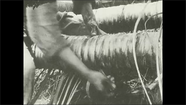 1930s: Hands wrap and tie fresh jute and reeds to bamboo pipe. Hands hammer wooden shims into pipe wrapping with knife.