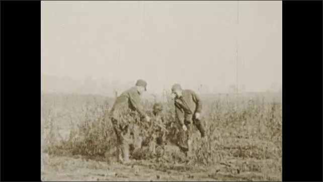 1930s: Title placard. Men bundle switch-willow branches and build hunting blinds.