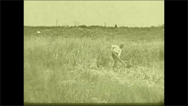 1930s: UNITED STATES: rat enters sewer. Man works in swamp land. Cows cross creek.
