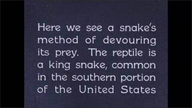 1930s: Person turns snake on back and it lays still then person flips snake upright and it moves. Title card.