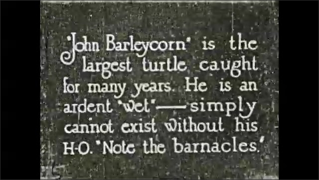 1930s: Sea turtles swim in salt water aquarium. Text placard.