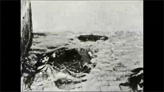 1930s: Sea turtles swim on surface of water in aquarium.