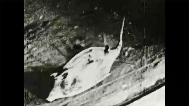 1930s: Text placard. Cow fish swim at bottom of saltwater aquarium. Text placard.
