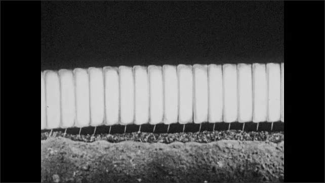 1930s: Animation of how worm moves across ground.