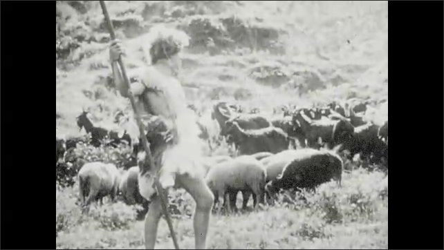 1930s: Words on screen. Man digs at soil with crude shovel. Man shepherds over large flock of sheep and goats. Words on screen. Man sacrifices lamb on fire on stone altar. Man kneels at altar.