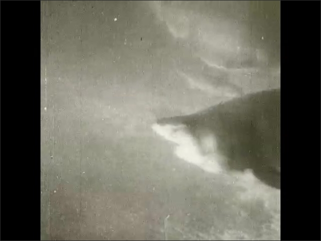 1930s: UNITED STATES: Shark suckers and Remoras. Shark swims with sucker fish underneath. Remoras fish swims below shark.