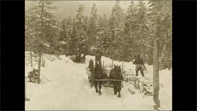 1920s: UNITED STATES: horses transport logs through snow. Men load carts with wood. Logs piled high in forest