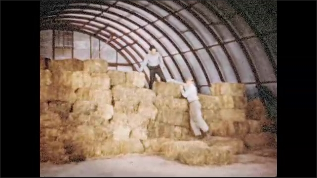 1950s: Two men stack bales of hay in storage building. Baby sheep on bed of hay in storage building. People walk past business store fronts.