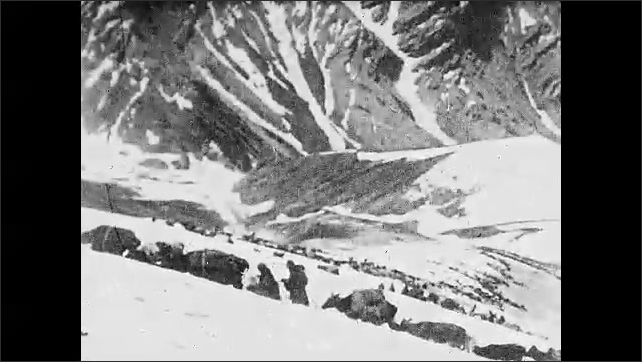 1920s: ARABIA: tribe move animals over mountains. Cows and people cross mountain in snow and wind. Dog on mountain. Family on mountain.