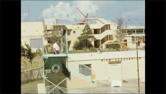 1950s: UNITED STATES: seal balances ball for tourists. Man and seal perform tricks. Seal jumps into pool. Miami Seaquarium visit