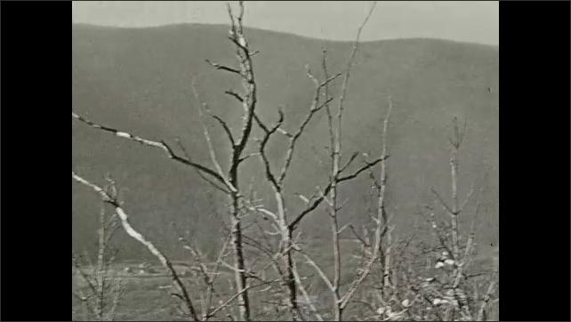 1940s: Deer graze on hill.  Mountain.  Treetops.