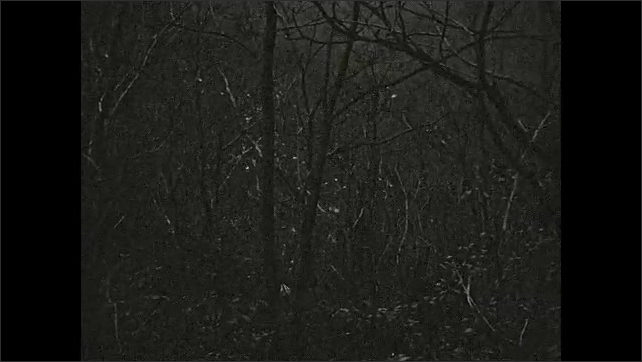 1940s: Men walk through woods.