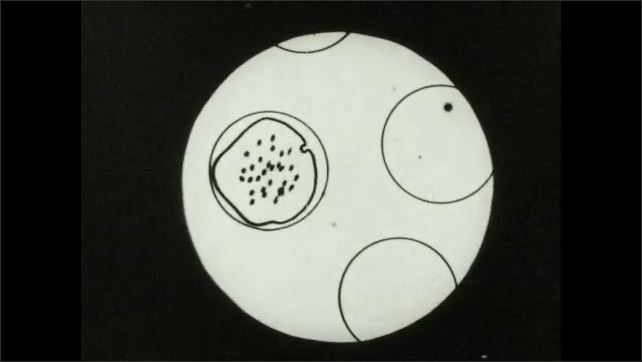 1930s: Animated microbe grows and multiplies inside illustrated cell. Microbes burst forth from illustrated cell.