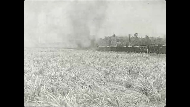 1930s: Title card. Train hauling cars of sugar cane travels down tracks by field.