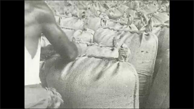 1930s: Men in factory tie up bags filled with brown sugar. Man ties bag closed. Man wheels sack of brown sugar on dolly across factory.