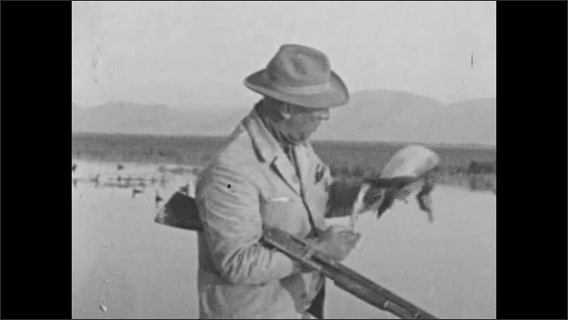 1930s: UNITED STATES: man retrieves fallen duck from water. Bill on duck. Man shoots duck. Duck falls from sky
