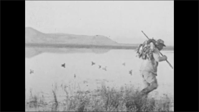 1930s: UNITED STATES: man carries ducks on end of gun. Man wades through water