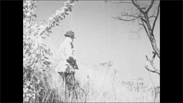 1930s: UNITED STATES: hunters with guns walk through undergrowth. Dog walks with hunter