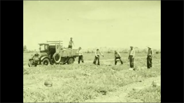 1930s: Workers harvest crops, load them into truck.