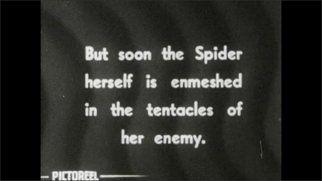 1930s: Spider traps hunting wasp in spiderweb. Title card: But soon the Spider herself is enmeshed in the tentacles of her enemy.