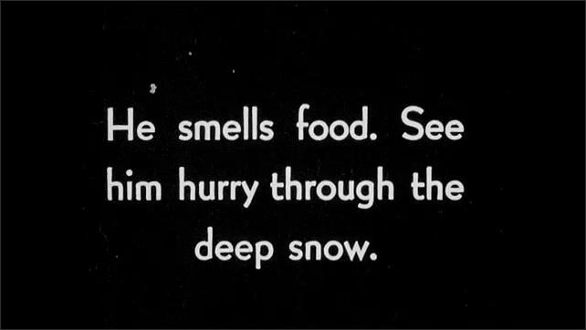 1930s: Boy stands in snowy forest. Bear climbs down tree. Intertitle card. Bear walks across snowy ground.